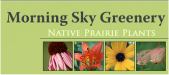 Morning Sky Greenery: MN Native prairie plant nursery milkweed asclepius