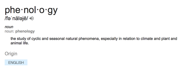 Phenology defination
