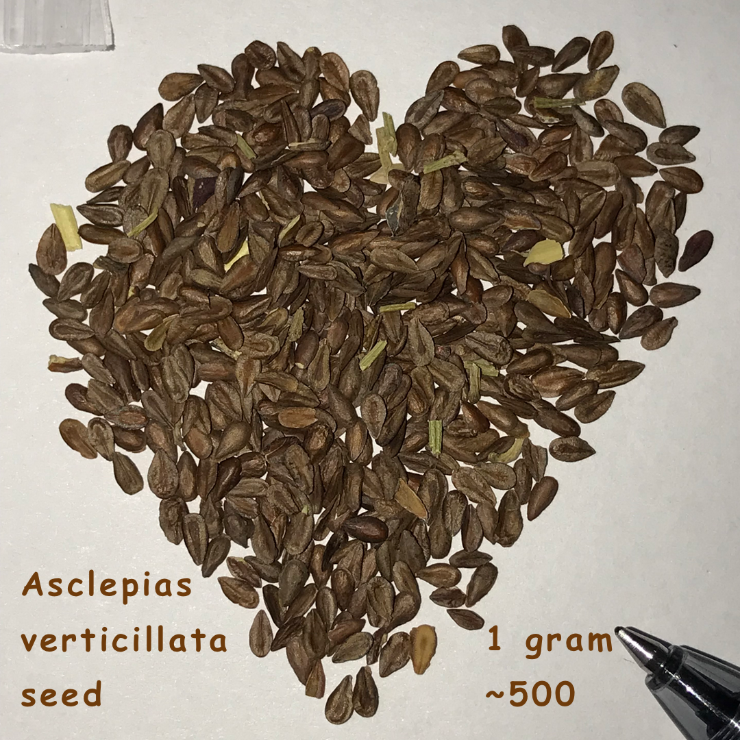 Milkweed seeds for sale